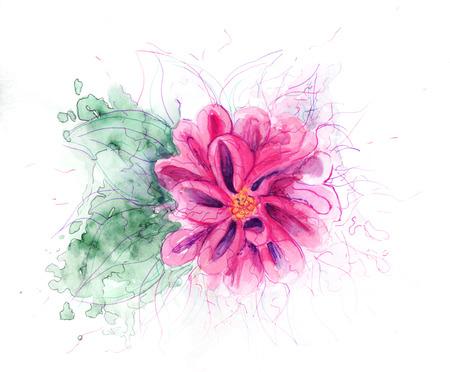 fuchsia flower: Fuchsia Flower Stock Photo
