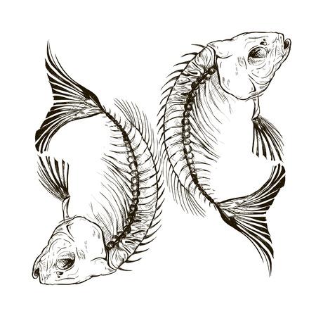 peces caricatura: Vector esqueleto de pescado, un talismán, un signo Vectores