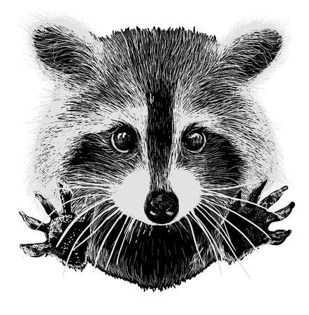 snuggle: cute raccoon vector requests cuddle and snuggle