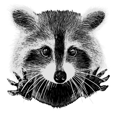 peticiones vector mapache lindo abrazar y acurrucarse