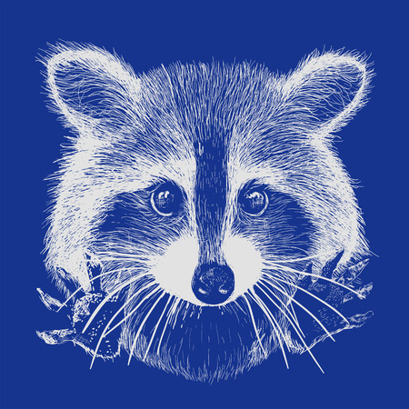 racoon: cute raccoon vector requests cuddle and snuggle