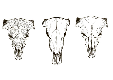 cow skull: Drawing animal skulls set black and white sketch, illustrations drawing cow skull with horns