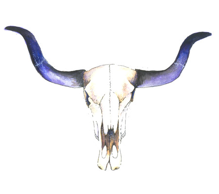 Watercolor cow skull with flowers and feathers, watwrcolor, shirt design
