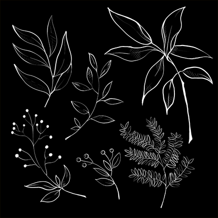 Set of hand drawn branches. Ink illustration. Illustration