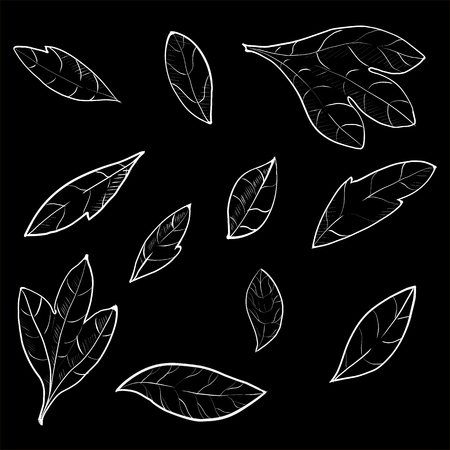 Set of hand drawn branches. Ink illustration. 일러스트