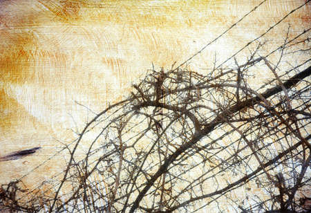 positioned: Warm brown texture with outlines of dried vine positioned on barbed wire fence