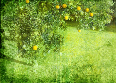 Grunge lemon tree background on paper texture burnt order photo