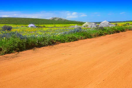 Dirt road among bright spring wild flowers field in West Coast National Park, South Africa photo
