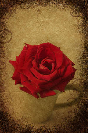 Red rose in full bloom in small vase on grunge background photo
