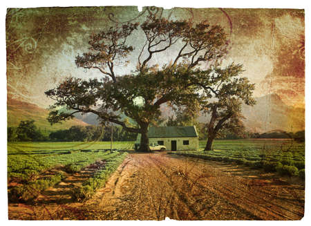 Grunge illustration of green lavender fields with an oak tree next to a farm house with a car. illustration