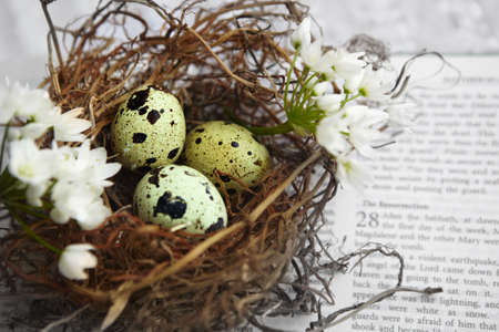 the scriptures: uail spotted eggs in a twig nest on a Bible verse background Stock Photo