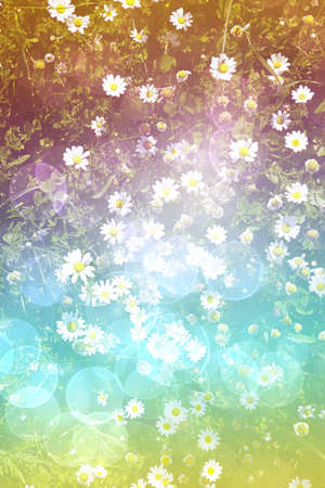 bright daisy field background with bokeh effect Stock Photo - 6835564