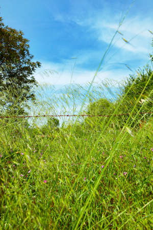 Beautiful green grass with blue sky in the background on a farm in Kirazli in Turkey. photo