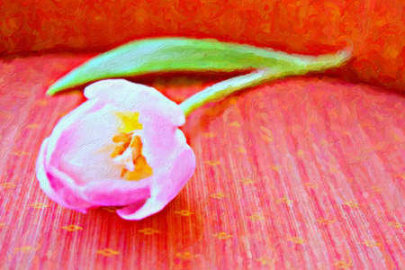 digital painting of a tulip with copy space on pink background made from my photograph . photo
