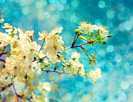green flower: cherry flowers on grunge background