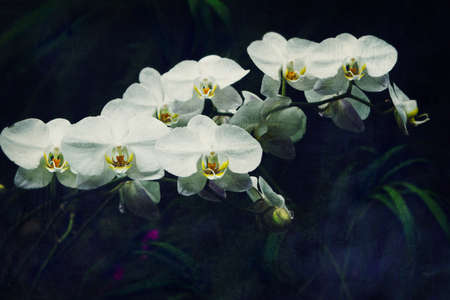 white orchid: fresh white orchid flower in garden background with grunge old texture in vintage style. Stock Photo