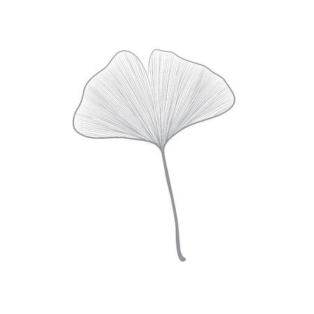 Grey ginko leaf line drawing on white background Illustration