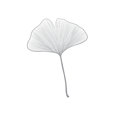 Grey ginko leaf line drawing on white background 矢量图像