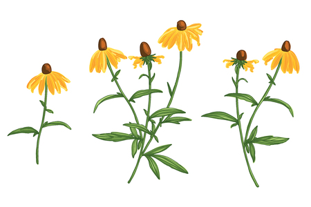Hand Drawn Rudbeckia Flower Set. Line Drawing Vector. Botanical Artistic Line Design
