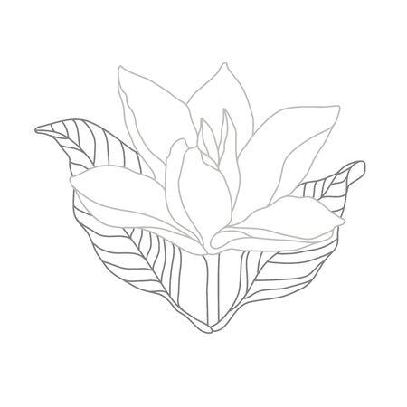 Magnolia Monochrome Line Illustration on White. Flower Logo Design Illustration