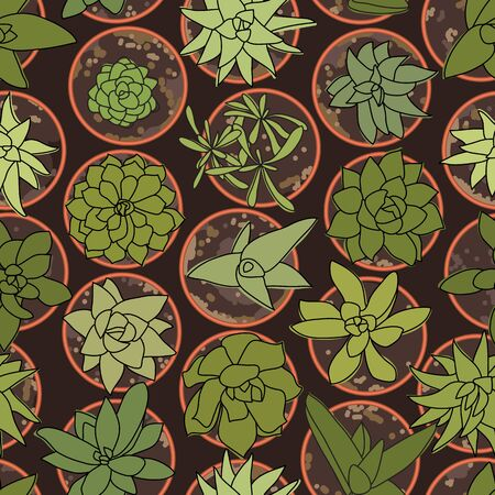 Green Cactus in Pots top-view Pattern on Brown