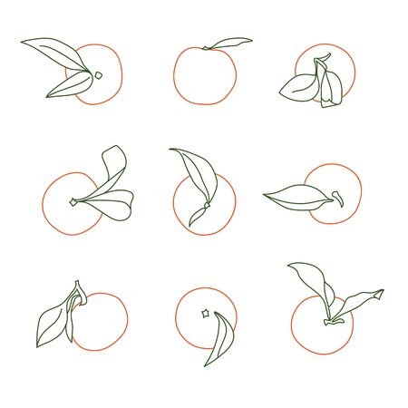 Minimalist and Modern Tangerine Selection Vector Line Drawing Designs Isolated on White Illustration