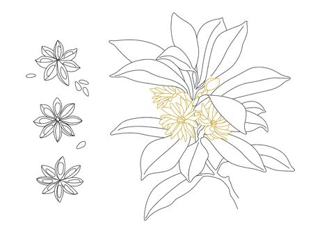 Beautiful Star Anise Vector Line Drawing Design. Illicium Anisatum Ilustrace