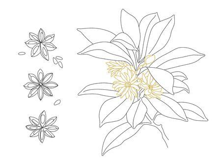 Beautiful Star Anise Vector Line Drawing Design. Illicium Anisatum Illustration