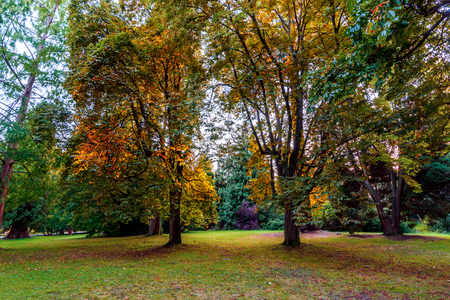 Yellow leaves of trees illuminated by evening sun rays in a green, autumn park with trees and shrubs