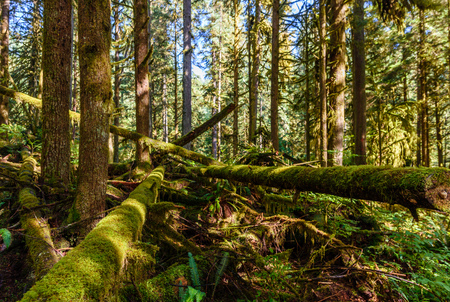 Subtropical forest with a windbreak and fallen trees, covered with green moss, fern and other plants on a clear summer day Stock Photo