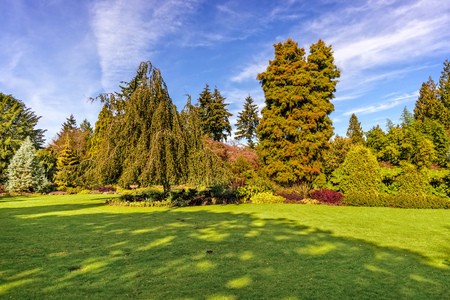 lawn of green grass with various trees and beautiful bushes in the background, a blue summer sky with clouds Stock Photo