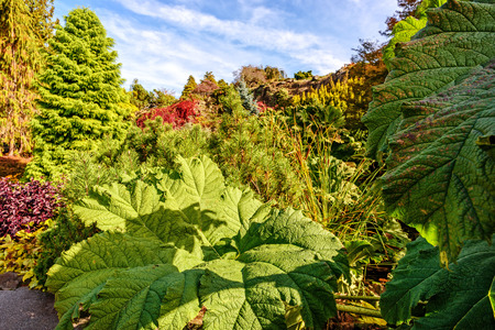 Huge green leaves of burdock, trees and beautiful bushes in the background, a blue summer sky with clouds