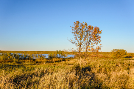 A tree with yellow leaves in a dense grass is not a field near a blue lake under an autumnal sky