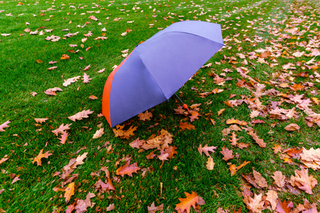 open blue umbrella lies on green grass with fallen red leaves in day time