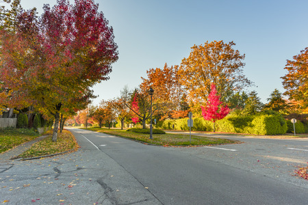 asphalt road in an autumn street with trees and fallen leaves along a green fence of plants and fir trees, a blue sky, a street lamp in the background
