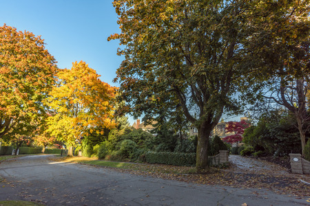 asphalt road in the autumn street with trees and fallen leaves along the green fence of plants and firs, blue sky, residential building in the background Reklamní fotografie