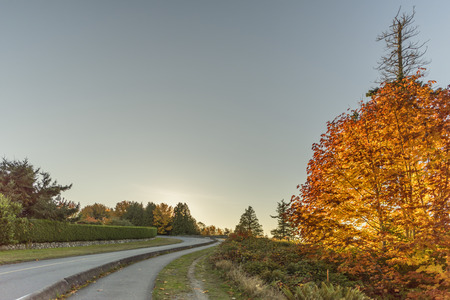 asphalt road between trees and bushes in the autumn evening. Tree with red and yellow leaves on the right, blue sky in the background Reklamní fotografie