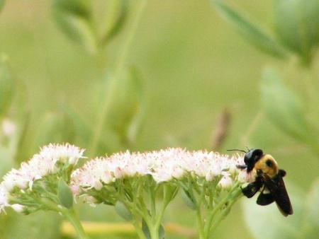 The King Bee photo