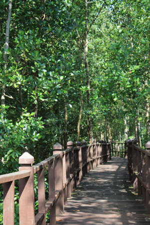 wooden jetties in the middle of the mangrove forests photo
