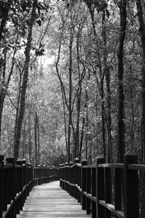 wooden jetty and forests photo