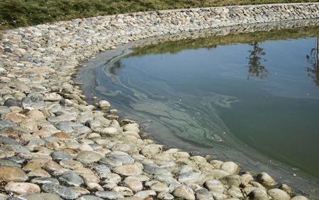 slick: Oil slick on pond edge