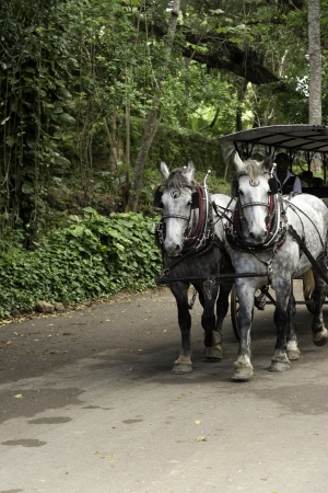 horse and carriage: Horse drawn carriage