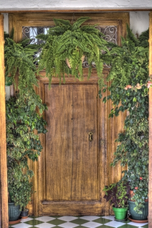 detailed, colorful door surrounded by lush green plants photo