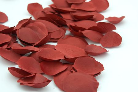 dispersed: Dispersed  rose petal on white background