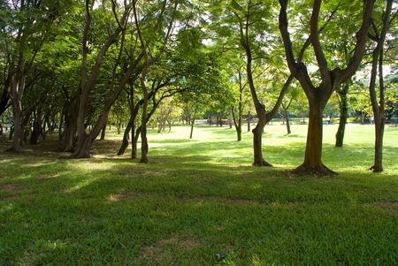 Green garden with tall trees and green grass photo
