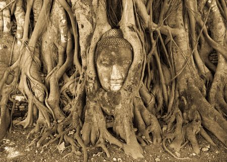 Buddha head grow inside of ancient tree photo
