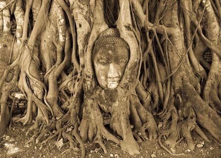 Buddha head grow inside of ancient tree