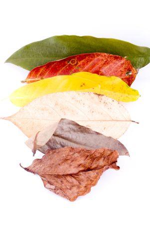 sapless: colorate foglie di autunno isolato su sfondo bianco Archivio Fotografico