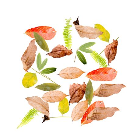 colorful autumn leaves isolated on white background Stock Photo - 3813496