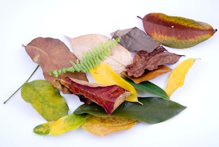 sapless: foglie colorate isolato su sfondo bianco